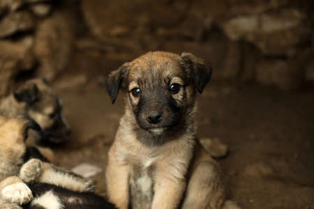 Homeless puppy in abandoned house. Stray baby animal Stock Photo