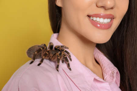 Woman with striped knee tarantula on yellow background, closeup. Exotic pet Archivio Fotografico