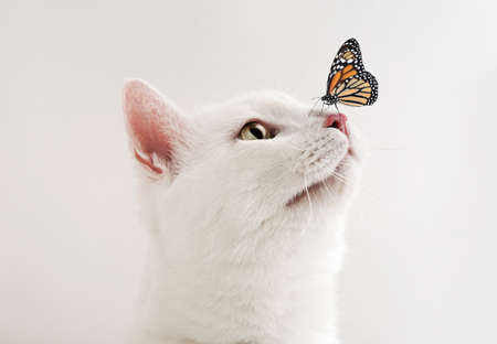 Cute tabby cat and butterfly on white background