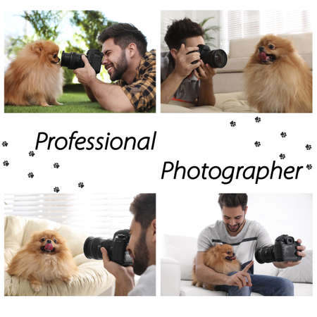 Collage of professional animal photographer taking pictures Imagens
