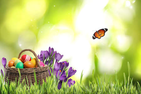 Wicker basket with Easter eggs near flowers in green grass and butterfly on blurred background