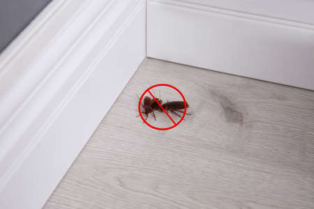 Cockroaches with prohibition sign indoors. Pest control