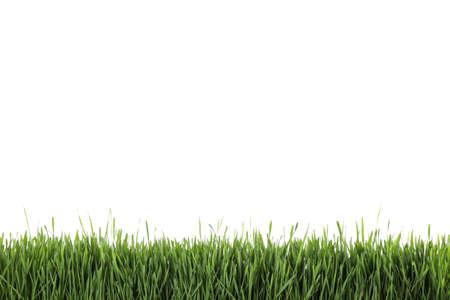 Herbe verte fraîche sur fond blanc. Saison de printemps