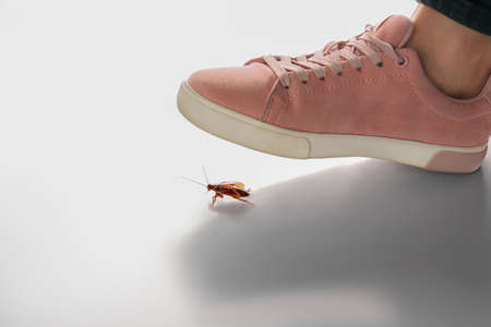 Woman crushing cockroach with feet on white background, closeup. Pest control