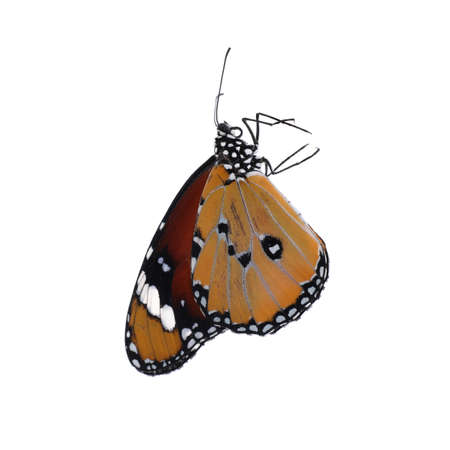 Beautiful painted lady butterfly isolated on white Standard-Bild