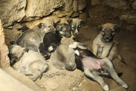 Homeless puppies in abandoned house. Stray baby animals