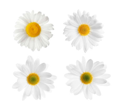 Set of beautiful chamomile flowers on white background, top view Stock Photo