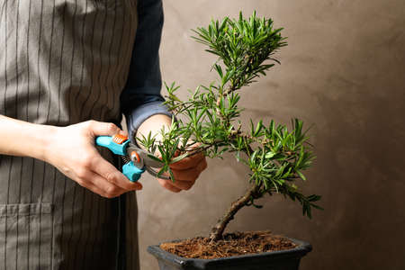 Woman trimming Japanese bonsai plant, closeup. Creating zen atmosphere at home