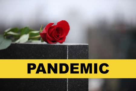 Red rose on black granite tombstone outdoors. Outbreak of pandemic disease 스톡 콘텐츠