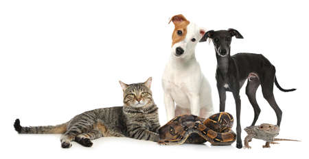 Group of different pets on white background. Banner design