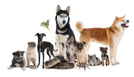 Group of different pets on white background. Banner design Standard-Bild