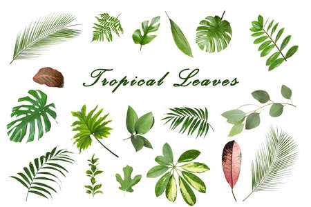 Set of different tropical leaves on white background