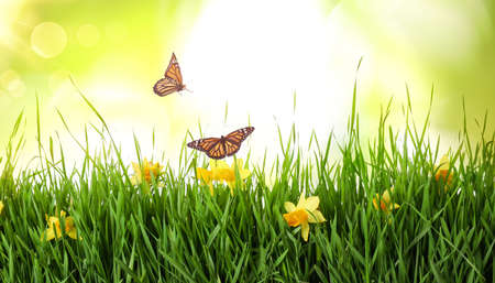 Monarch butterflies flying above green grass with spring flowers
