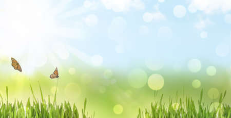 Fresh green grass and butterflies on sunny day. Spring season Stock fotó