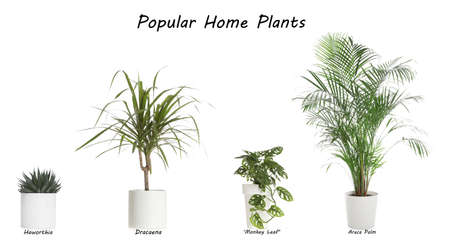Set of popular house plants on white background Standard-Bild