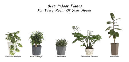 Set of best house plants on white background