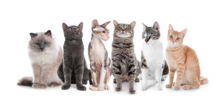 Adorable cats on white background. Lovely pets