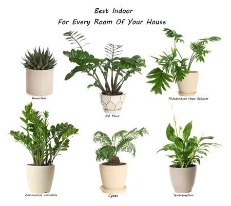 Set of best house plants on white background Stock Photo