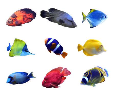 Ensemble de différents poissons tropicaux lumineux sur fond blanc Banque d'images
