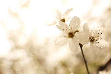 Closeup view of blossoming tree outdoors on spring day