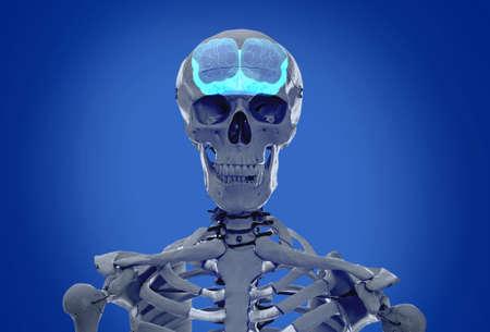 Artificial human skeleton model on blue background. Medical scan of brain