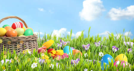 Wicker basket with Easter eggs in green grass against blue sky, space for text. Banner design Archivio Fotografico