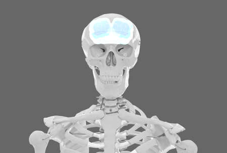 Artificial human skeleton model on grey background. Medical scan of brain