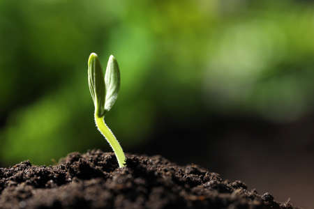 Little green seedling growing in soil, closeup. Space for text