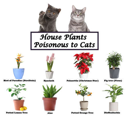 Set of house plants poisonous to cats and kittens on white background