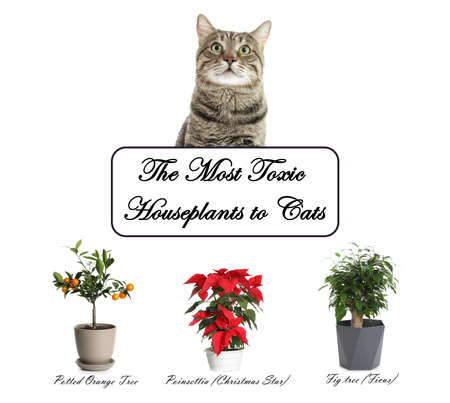 Set of house plants poisonous to cats and kitten on white background