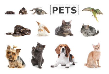 Set of different pets on white background Imagens
