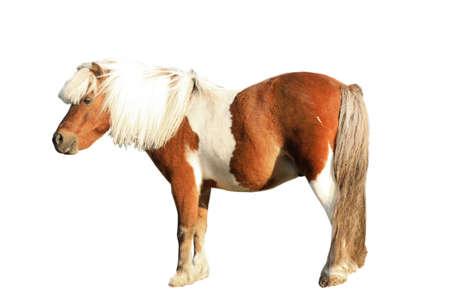 Beautiful pony on white background. Pet horse