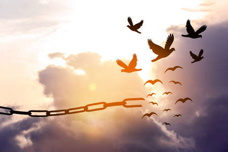 Freedom concept. Silhouettes of broken chain and birds flying in sky