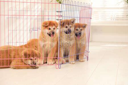 Cute Akita Inu puppies in playpen indoors. Baby animals