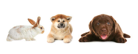 Collage with different adorable baby animals on white background. Banner design Foto de archivo