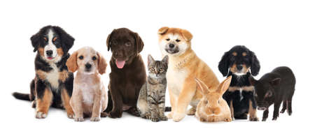 Collage with different adorable baby animals on white background. Banner design