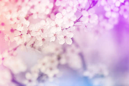Closeup view of blossoming spring tree outdoors, color toned Stock Photo