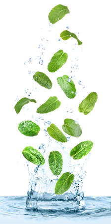 Green mint leaves falling into clear water on white background Archivio Fotografico