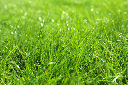 Lush green grass outdoors on sunny day, closeup Imagens