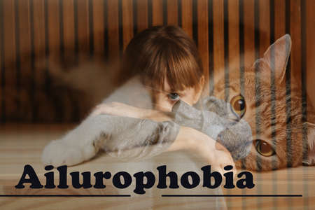Little girl suffering from ailurophobia indoors. Irrational fear of cats