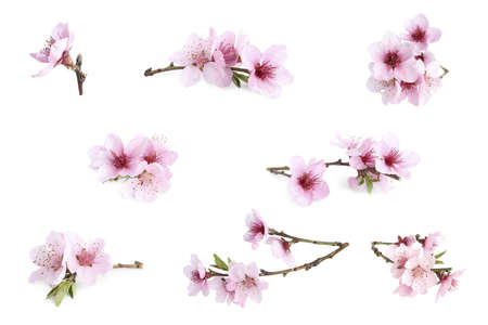 Set of tree branches with flowers on white background. Spring blossom