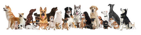 Collage with different dogs on white background. Banner design Stock Photo