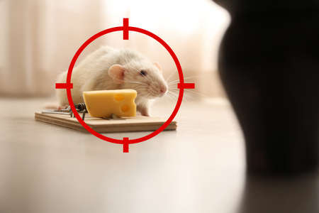 Gun target on rat near mousetrap with cheese indoors. Pest Control