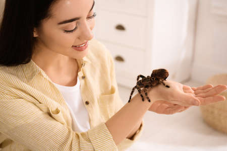 Woman holding striped knee tarantula at home. Exotic pet 版權商用圖片
