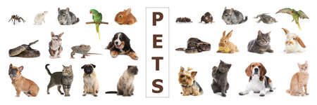 Set of different pets on white background. Banner design
