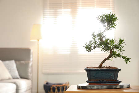 Japanese bonsai plant on table in living room, space for text. Creating zen atmosphere at home
