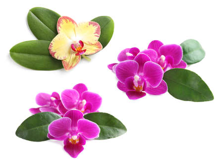 Set of beautiful orchid flowers with leaves on white background