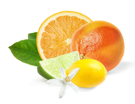 Different citrus fruits with leaves on white background