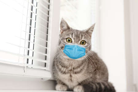 Cute tabby cat in medical mask on window sill indoors. Virus protection for animal Reklamní fotografie