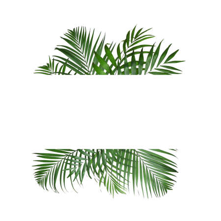 Frame made of beautiful lush tropical leaves on white background, top view. Space for text
